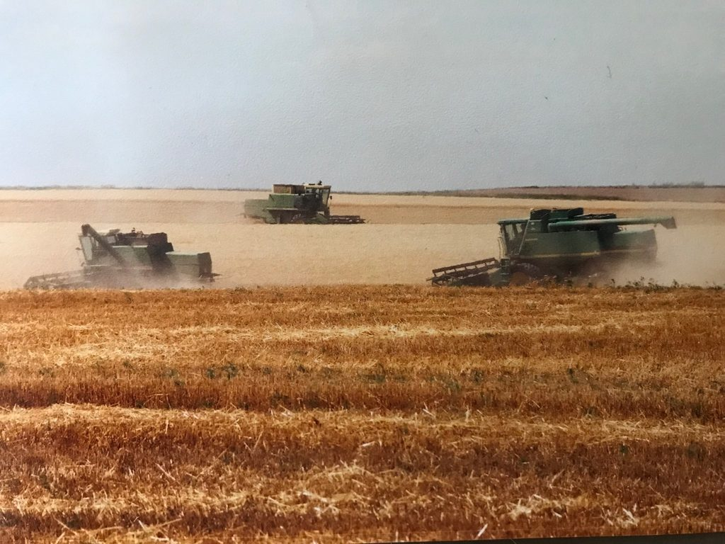 Wheat harvest with combines
